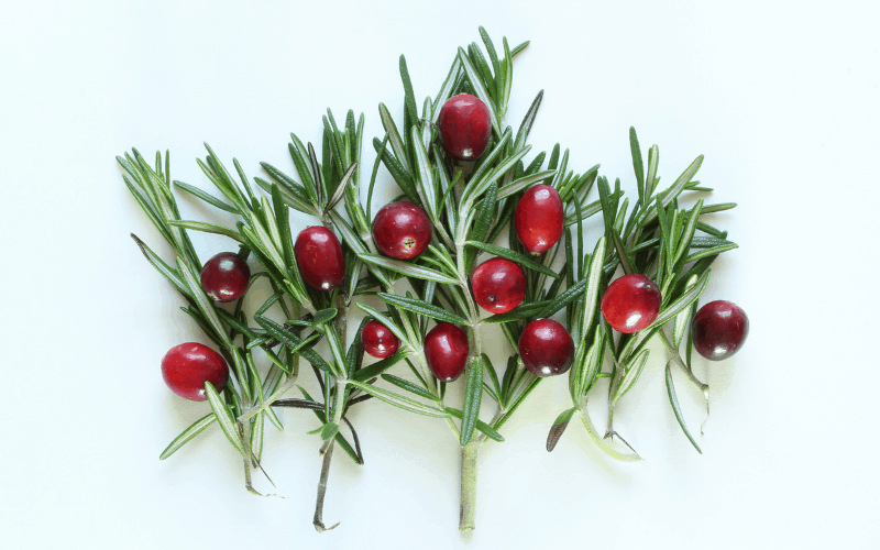 Rosemary spriga and cranberries for garnish